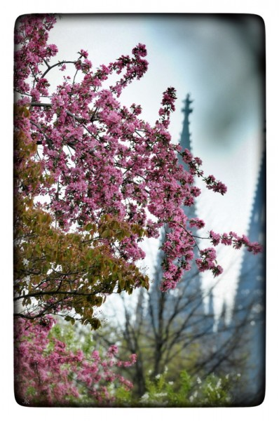 "Fotografie Joachim Rieger ""Rosa Blüten"" auf Leinwand"